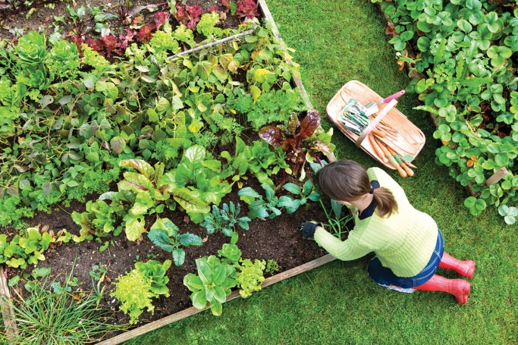 Digging The Vegetable Garden