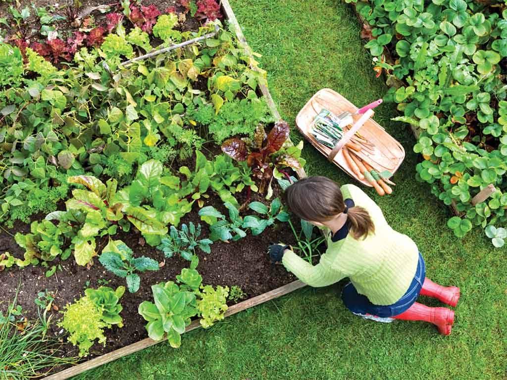Vegetable-Garden-s