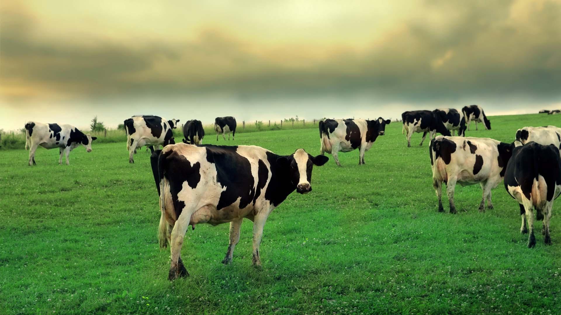 แนวทางเกษตรอินทรีย์ ด้วยระบบเกษตรกรรมยั่งยืน